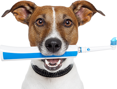 dog-with-toothbrush-402x307